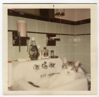 GREEN EYED CAT IN A SINK NEST VINTAGE COLOR SNAPSHOT PHOTO