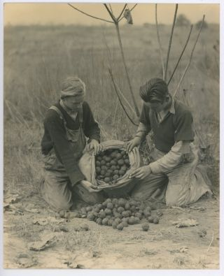 1940s FARM LABOR PHOTOS from SCENIC SOUTH MAGAZINE - LOUISVILLE KY