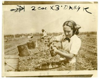 CHILD FARM LABOR CALIFORNIA PRESS PHOTO 1942 #3