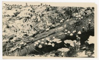 1910s MUSHROOM PHOTOS & BOOK OWNED by VINING C DUNLAP while at CORNELL